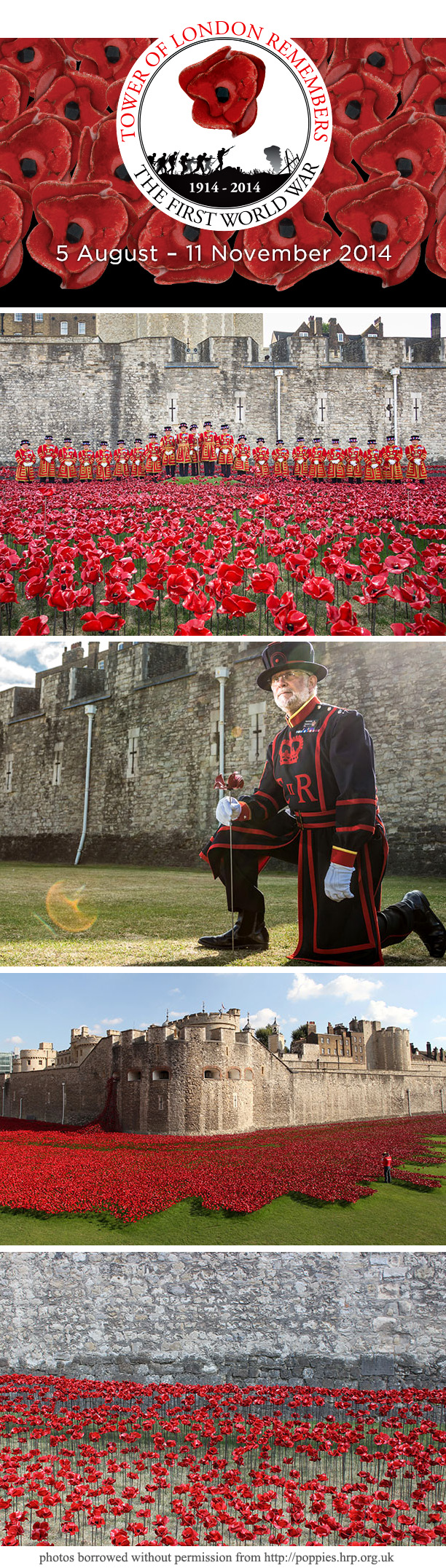 UK poppies 2014