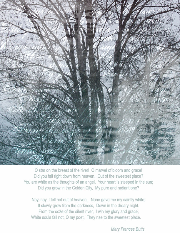 Wintertrees2_2