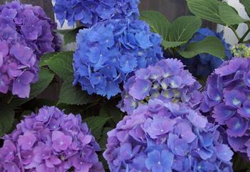 Purpleflowers_1